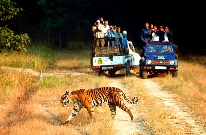 Uttarakhand Wildlife Safari