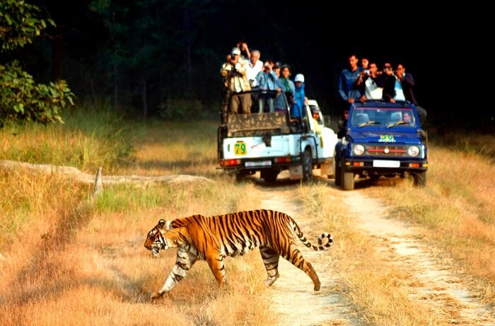 Uttarakhand Wildlife Safari